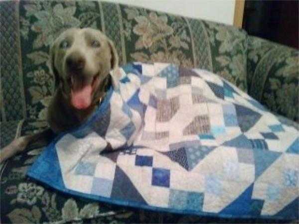 Ruger with his quilt.